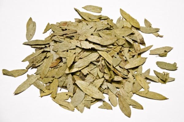 Φύλλα Σιναμικής